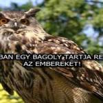 HOLLANDIÁBAN EGY BAGOLY TARTJA RETTEGÉSBEN AZ EMBEREKET!