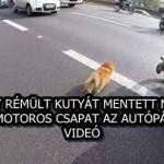 EGY RÉMÜLT KUTYÁT MENTETT MEG EGY MOTOROS CSAPAT AZ AUTÓPÁLYÁN – VIDEÓ