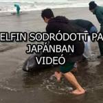 150 DELFIN SODRÓDOTT PARTRA JAPÁNBAN – VIDEÓ