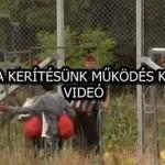 ILYEN A KERÍTÉSÜNK MŰKÖDÉS KÖZBEN! – VIDEÓ