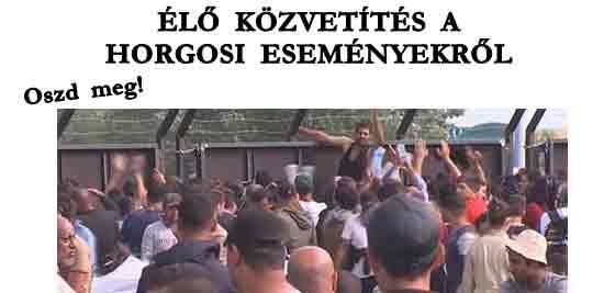 ÉLŐ KÖZVETÍTÉS A HORGOSI ESEMÉNYEKRŐL!