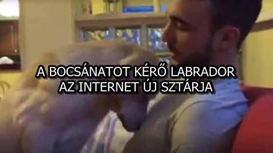 A BOCSÁNATOT KÉRŐ LABRADOR AZ INTERNET ÚJ SZTÁRJA
