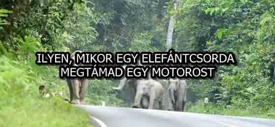 ILYEN, MIKOR EGY ELEFÁNTCSORDA MEGTÁMAD EGY MOTOROST