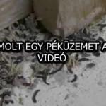 FELSZÁMOLT EGY PÉKÜZEMET A NÉBIH – VIDEÓ