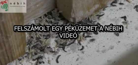FELSZÁMOLT EGY PÉKÜZEMET A NÉBIH - VIDEÓ