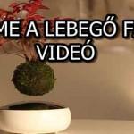 ÍME A LEBEGŐ FA - VIDEÓ