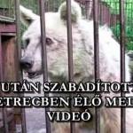 20 ÉV UTÁN SZABADÍTOTTÁK KI A KETRECBEN ÉLŐ MEDVÉT – VIDEÓ