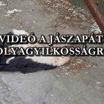VIDEÓ A JÁSZAPÁTI GÓLYAGYILKOSSÁGRÓL