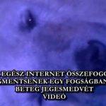 AZ EGÉSZ INTERNET ÖSSZEFOGOTT, HOGY MEGMENTSENEK EGY FOGSÁGBAN TARTOTT, BETEG JEGESMEDVÉT - VIDEÓ