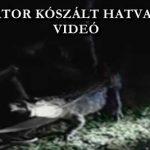 ALIGÁTOR KÓSZÁLT HATVANBAN – VIDEÓ