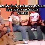 EGY OROSZLÁN ÉLŐ ADÁSBAN TÁMADOTT MEG EGY KISGYERMEKET – VIDEÓ