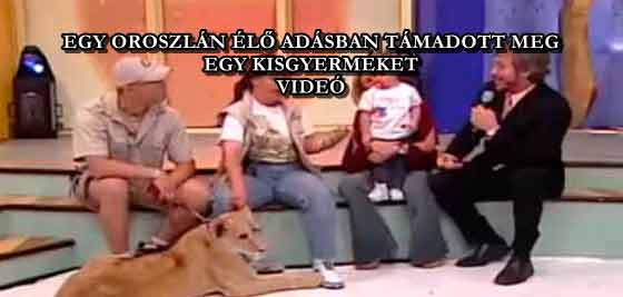 EGY OROSZLÁN ÉLŐ ADÁSBAN TÁMADOTT MEG EGY KISGYERMEKET - VIDEÓ