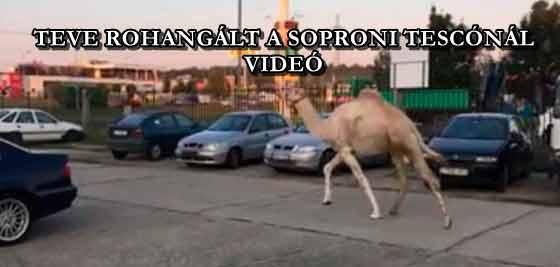 TEVE ROHANGÁLT A SOPRONI TESCÓNÁL - VIDEÓ