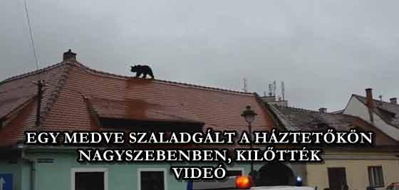EGY MEDVE SZALADGÁLT A HÁZTETŐKÖN NAGYSZEBENBEN, KILŐTTÉK - VIDEÓ