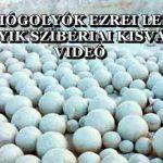ÓRIÁSI HÓGOLYÓK EZREI LEPTÉK EL AZ EGYIK SZIBÉRIAI KISVÁROST - VIDEÓ