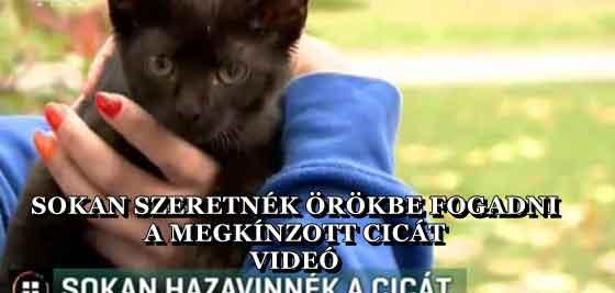 SOKAN SZERETNÉK ÖRÖKBE FOGADNI A MEGKÍNZOTT CICÁT - VIDEÓ