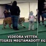 VIDEÓRA VETTÉK, AHOGY EGY TIGRIS MEGTÁMADOTT EGY KISLÁNYT