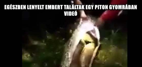 EGÉSZBEN LENYELT EMBERT TALÁLTAK EGY PITON GYOMRÁBAN - VIDEÓ