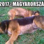 2017-MAGYARORSZÁG.