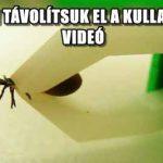 HOGYAN TÁVOLÍTSUK EL A KULLANCSOT? - VIDEÓ