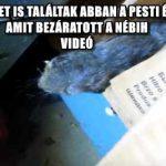 DÖGLÖTT EGERET IS TALÁLTAK ABBAN A PESTI ÉTTEREMBEN, AMIT BEZÁRATOTT A NÉBIH – VIDEÓ