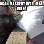 EZUTÁN BIZTOSAN MÁSKÉNT NÉZEL MAJD A FÓKÁKRA – VIDEÓ