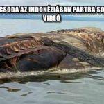 MEGVAN, HOGY MICSODA AZ INDONÉZIÁBAN PARTRA SODRÓDOTT SZÖRNY – VIDEÓ