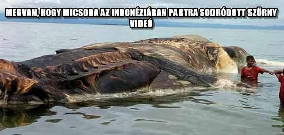 MEGVAN, HOGY MICSODA AZ INDONÉZIÁBAN PARTRA SODRÓDOTT SZÖRNY - VIDEÓ